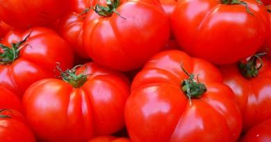 tomatoes-5356_1920